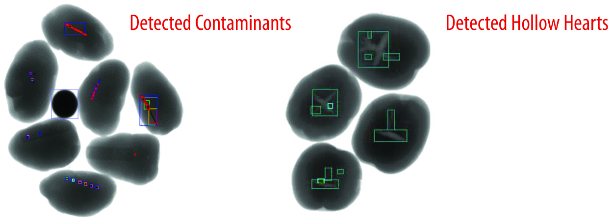 Plan-Potatoes-ContaminantsHollowHearts-.jpg